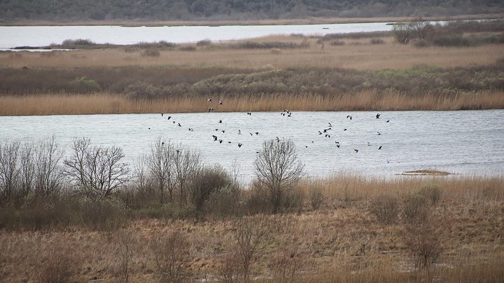 Monitoring stanja ptica u Parku prirode Hutovo blato