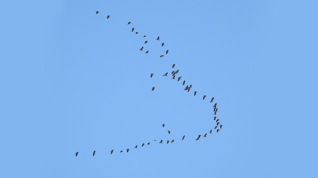 Migracija Ptica Featured